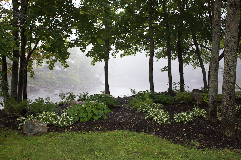 Trees and Lawn Planting by Union River #1