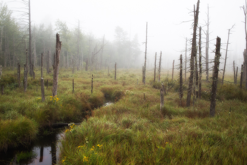 Foggy Wetland Glow #2