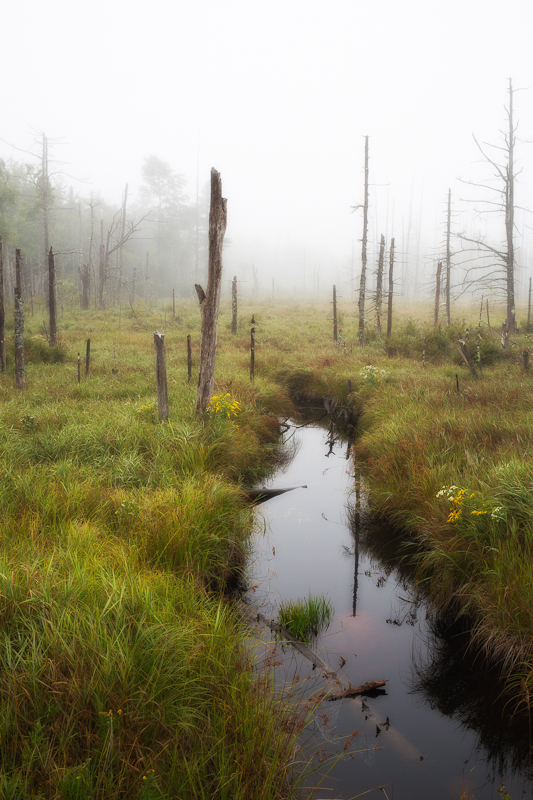 Foggy Wetland Glow #4