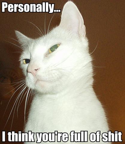 cat_skeptical2.jpg