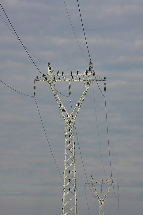 Transmission lines daljnovoda_MG_0768-1.jpg