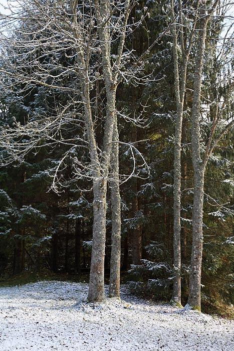 First snow prvi sneg_MG_7204-1.jpg
