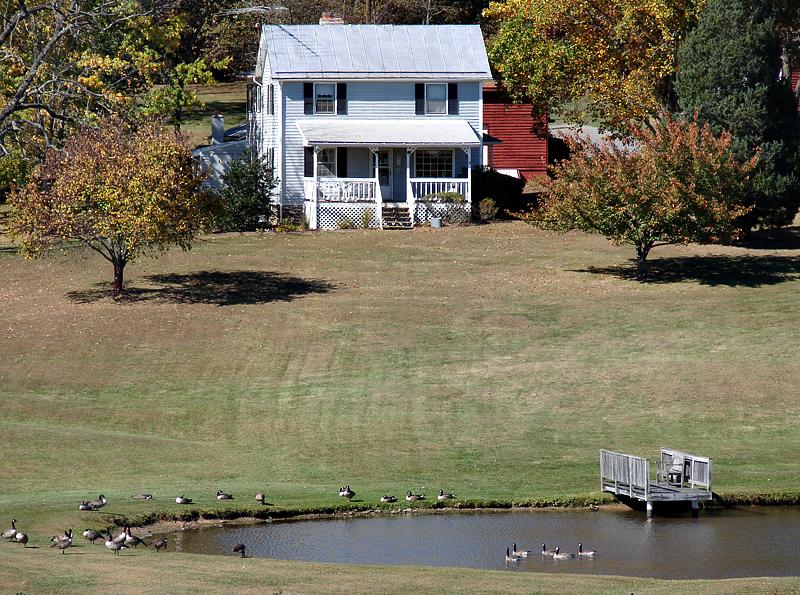 Farmhouse geese