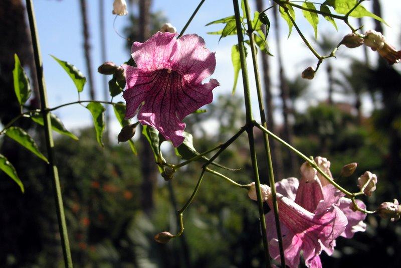 037 Marrakech - Majorelle - Pretty in pink.JPG