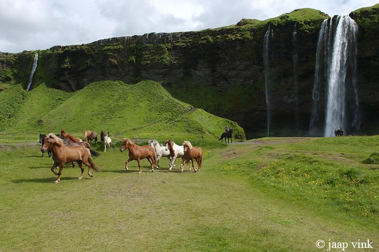 Icelandic Horses at Seljalandfoss