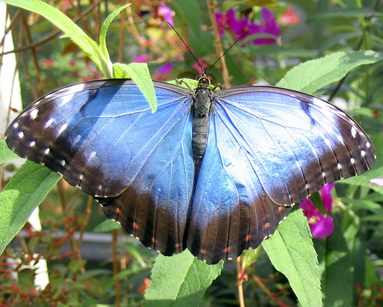 Butterfly, Florida