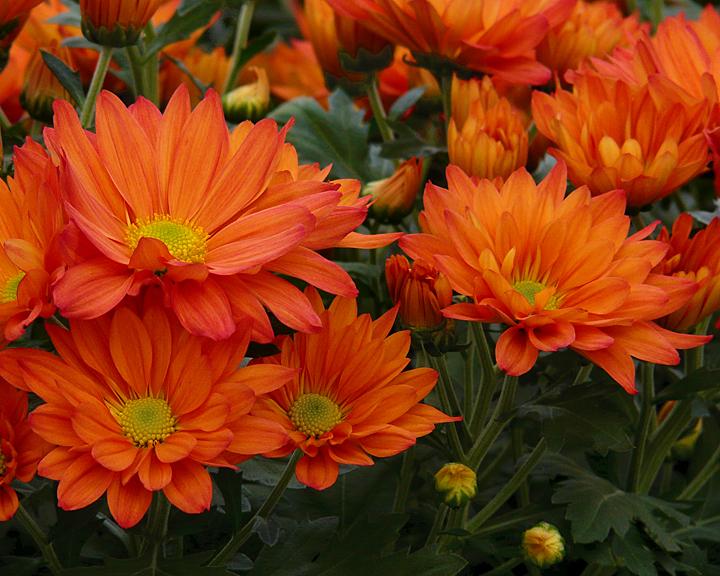 FLOWERS AT THE VAN WINGERDEN OPEN HOUSE (1)