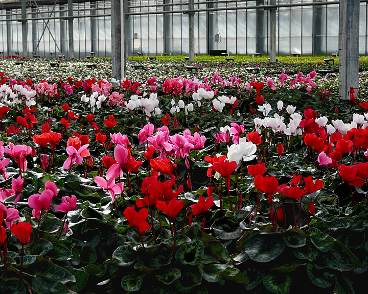 FLOWERS AT THE VAN WINGERDEN OPEN HOUSE (15)