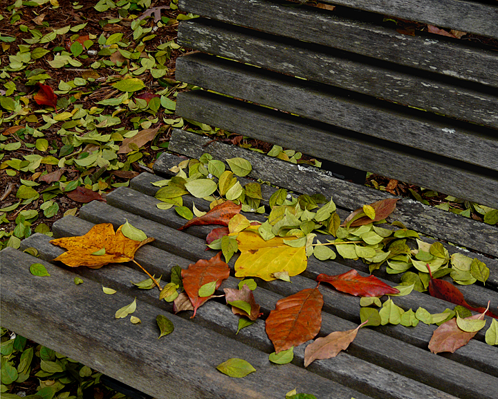 LEAVES ON A BENCH - COLOR