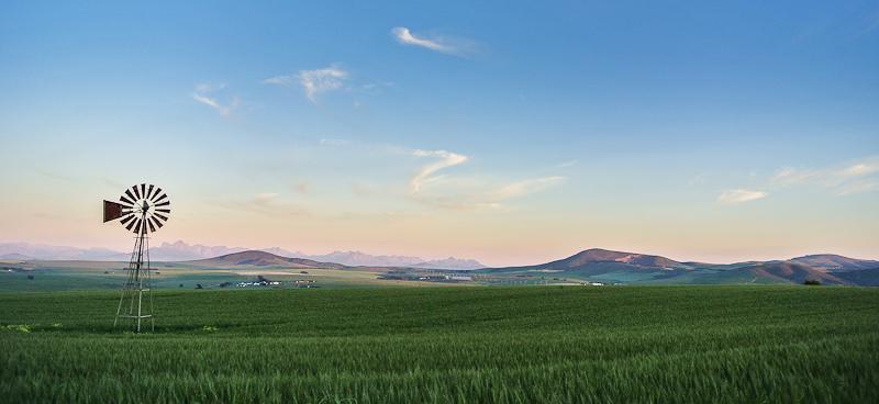 Wheat V1.jpg