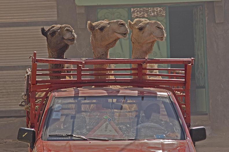 egypt, aswan 2005