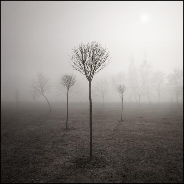 drzewka male.jpg