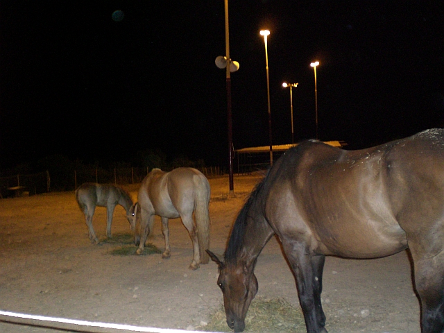 Arion Stables at night