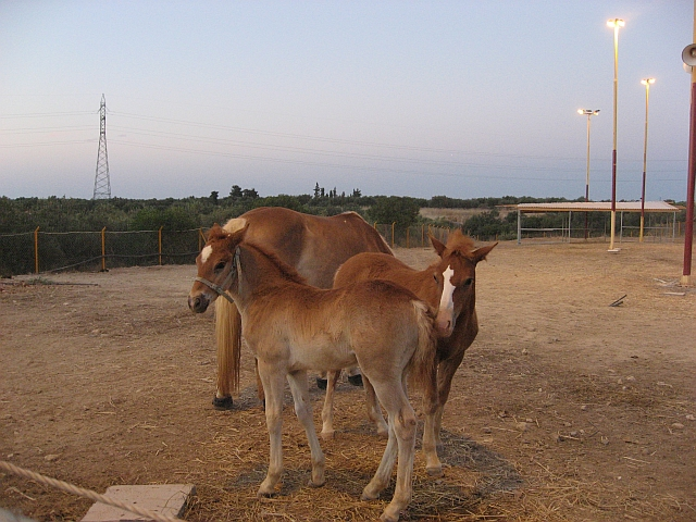 Arion Stables, young horses