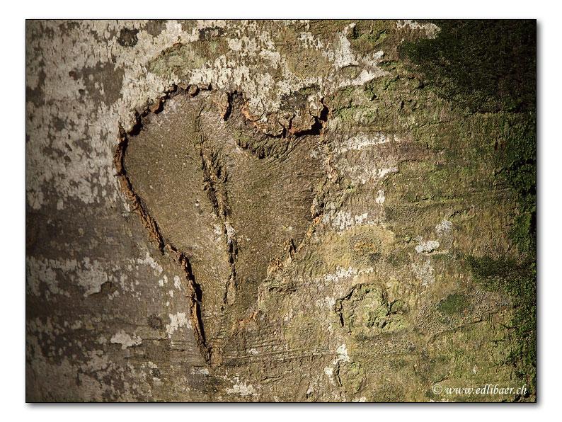 Valentinstag / Valentines Day (2342)