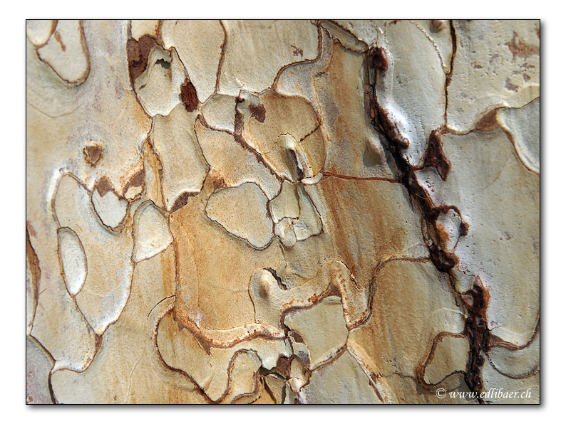 Baumrinde / tree bark (3727)