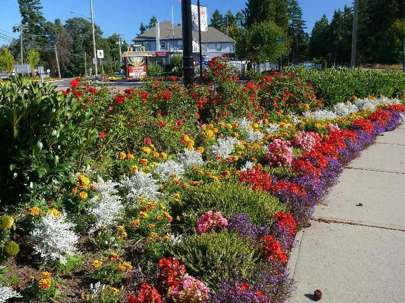 Flower Traffic circle Chemainus.jpg