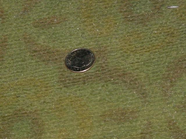 one thin dime :o)