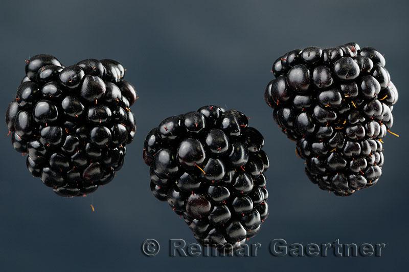 188 Blackberries 2.jpg
