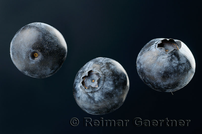 188 Blueberries 1.jpg