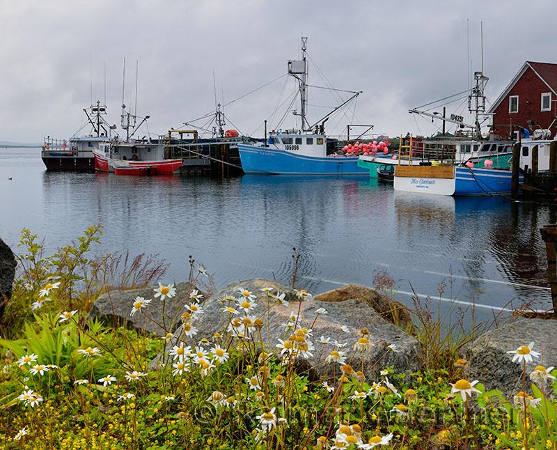 Fishing boats and wildflowers at Johns Cove or Yarmouth Bar Nova Scotia