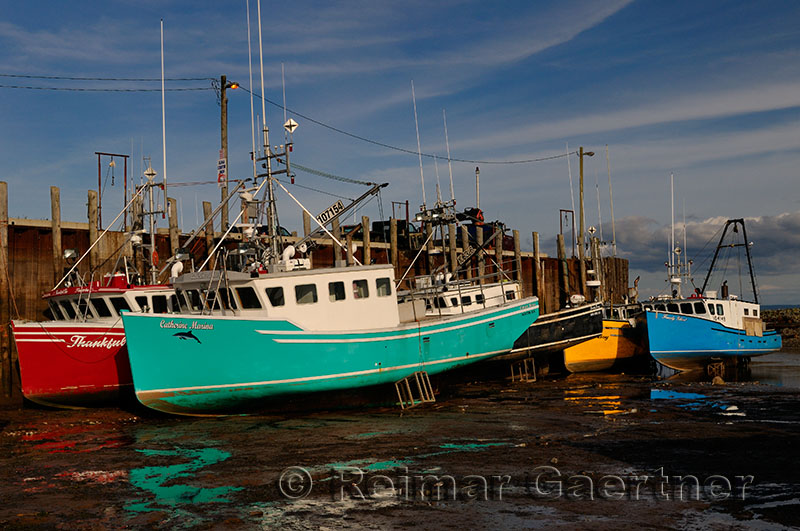 Colorful boats on the Bay of Fundy ocean floor at low tide on the wharf at Alma New Brunswick