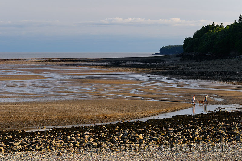 Couple with dog coming in with tide on the Bay of Fundy shores at Alma New Brunswick