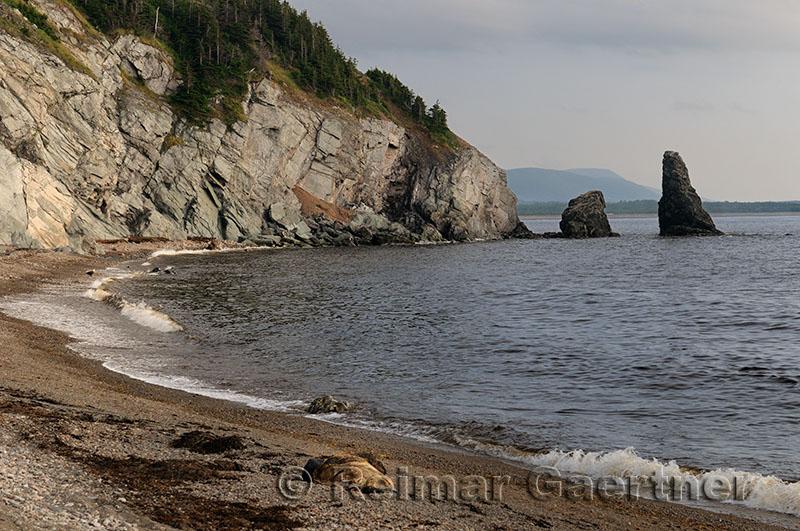 Dead Pilot Whale and Eagle on Pillar Rock beach Cabot Trail Cape Breton Highlands National Par