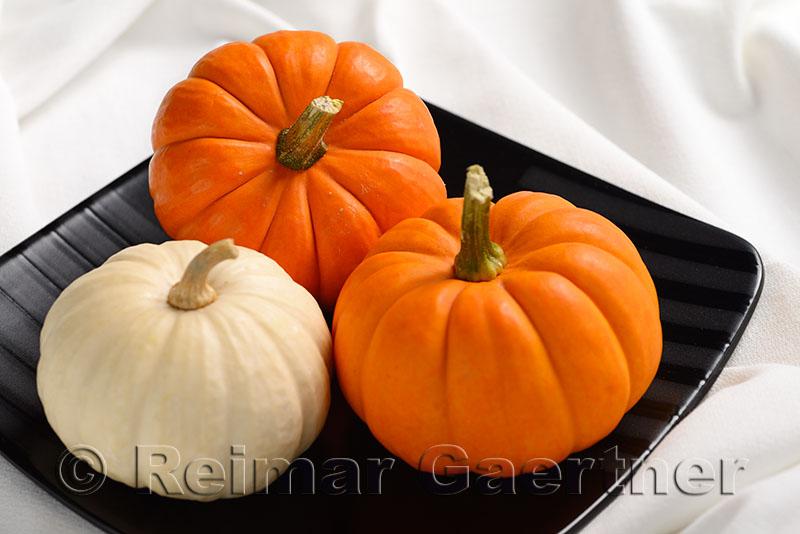 305 Pumpkins 2.jpg