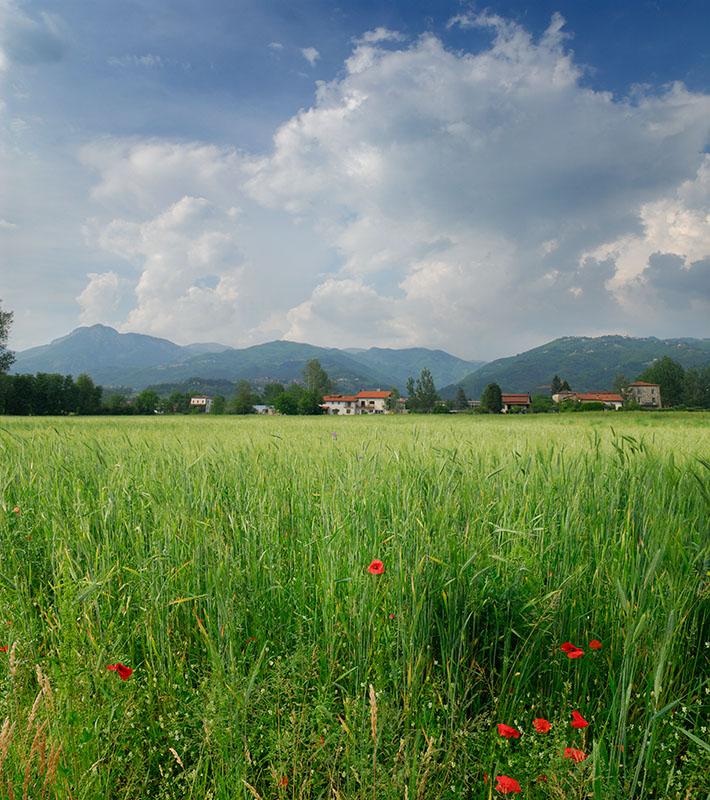 140 Garfagnana wheat field.jpg