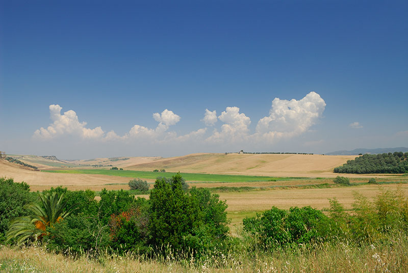 140 Viterbo wheat fields.jpg