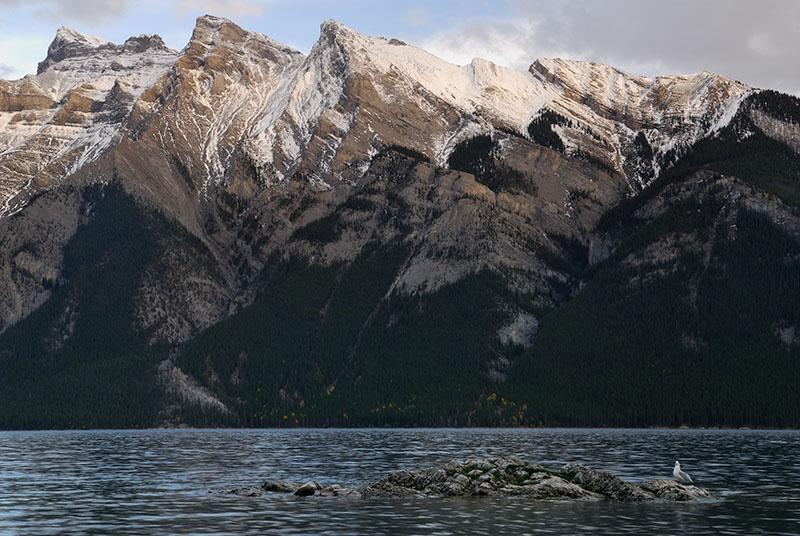 141 Lake Minnewanka Seagull 1.jpg