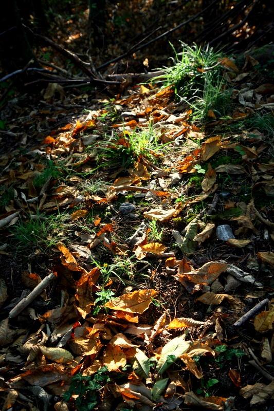 un tapis de feuilles.