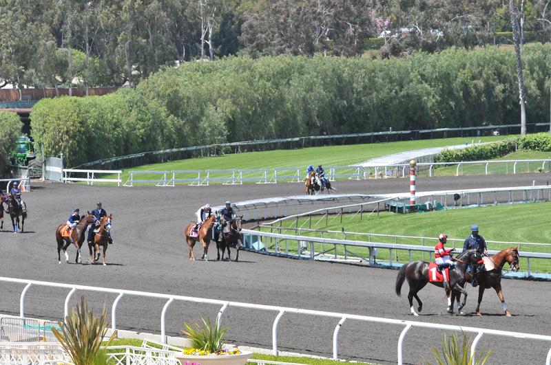 Horses for First Race Walk Toward Starting Gate