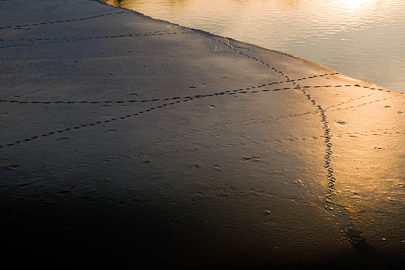 Sunset Duck Tracks Across Ice on the Mill Pond  ~  April 14