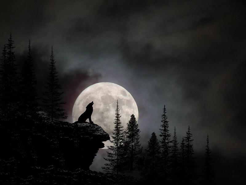 Αποτέλεσμα εικόνας για full moon wolf