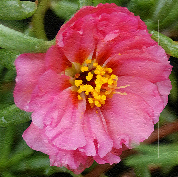 Rose Moss in Pink