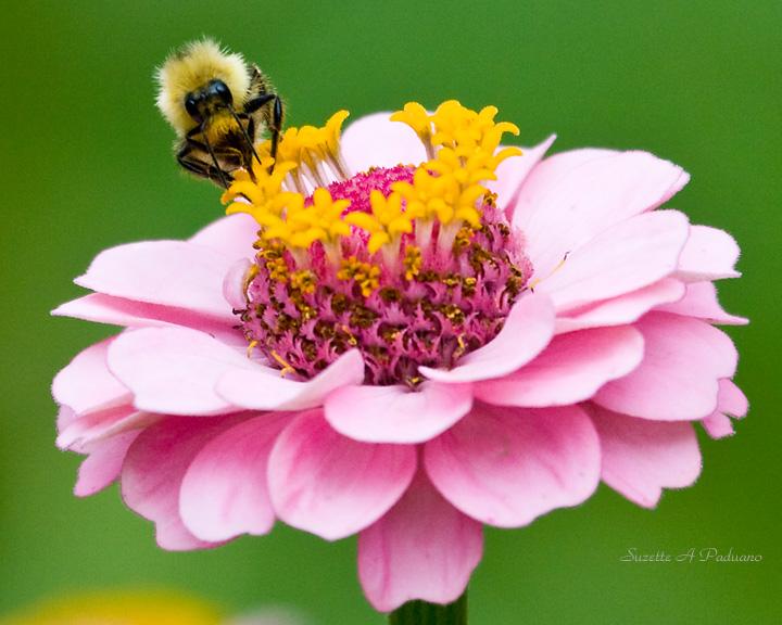 Bee sitting high
