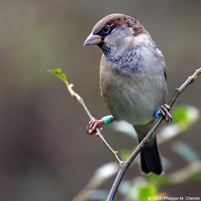 Loiseau sourcier - The water diviner bird