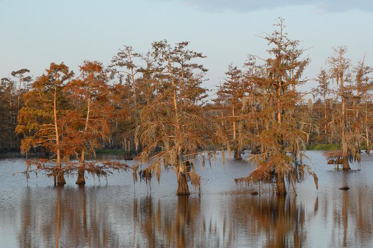 Cypress Colors