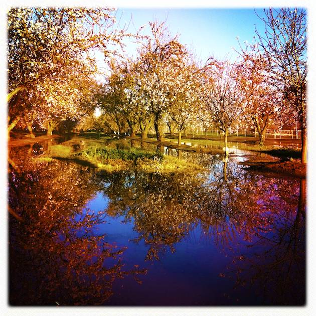 One Photograph, Two Orchards