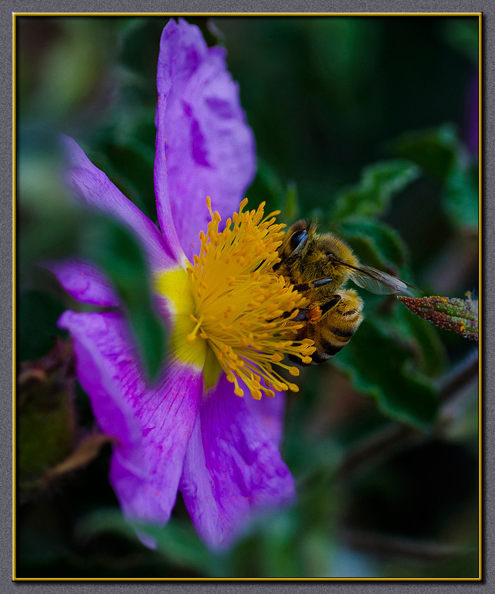 A beesy beesy bee...