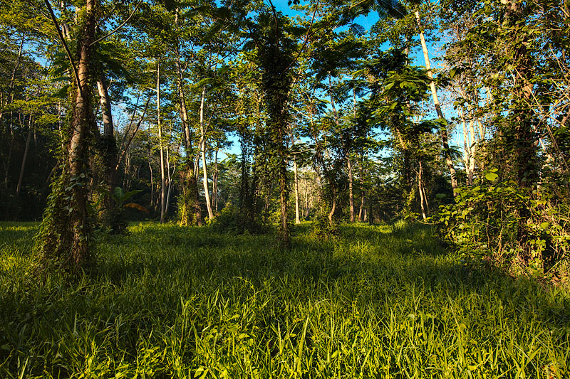 La Mesa Forest