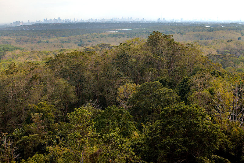 La Mesa Forest and city skyline