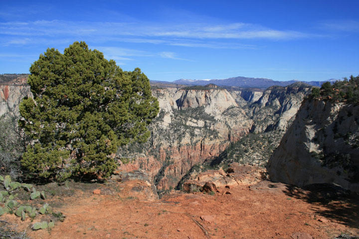 View from Observation Point; Zion National Park