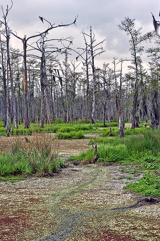 The Bayou Wetlands