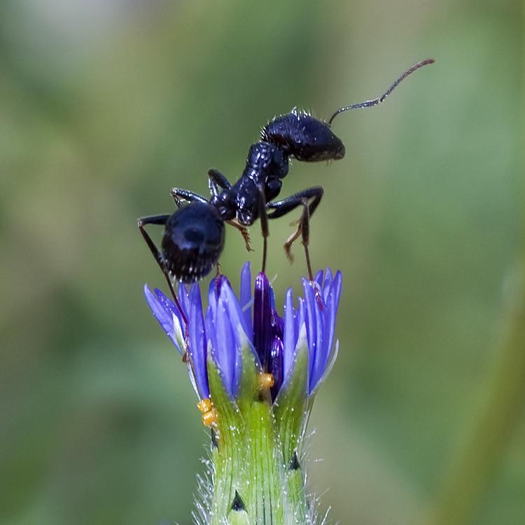 Ants monument...
