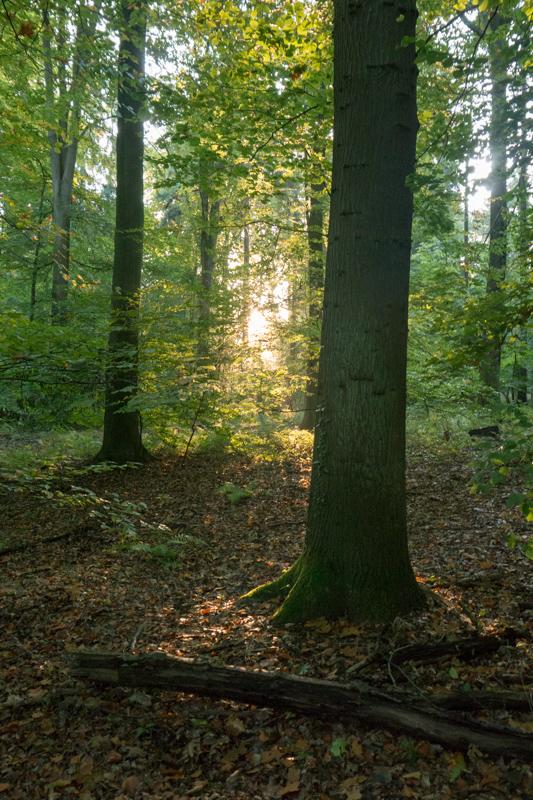 Sunrise in the Siebengebirge