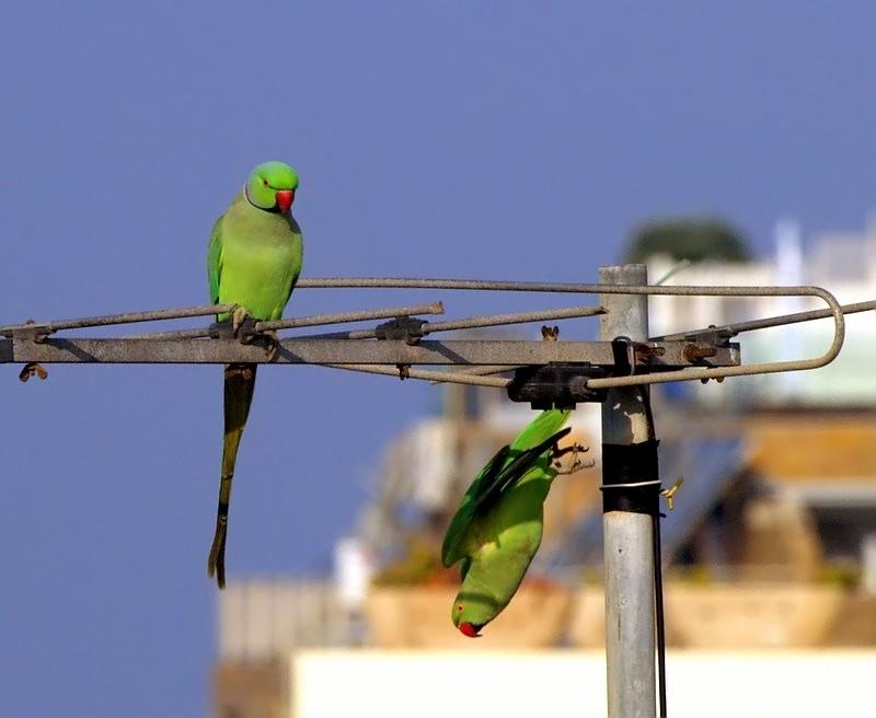 ta birdies look ma no hands.jpg