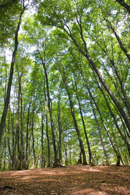 Nahar Khoran Forest